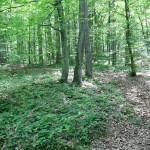 Forêt de Belgrade à Istanbul