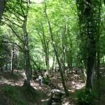 Forêt de Belgrade, Istanbul