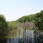 Plan d'eau forêt de Belgrade à Istanbul