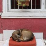 chien de rue à Istanbul
