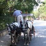 entretien de calèche Büyükada