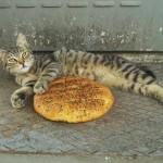 Un chat d'Istanbul et son pide du Ramadan