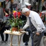 Oignons de fleurs à vendre dans une rue d'Istanbul