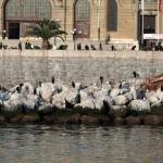 Cormorans et goélands devant la gare de Haydarpaşa