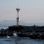 Cormorans et goélands font bon ménage à Istanbul
