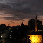 Danse nocturne des étourneaux sansonnet à Istanbul