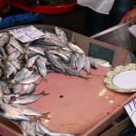 Çinekop sur le marché aux poissons de Karaköy