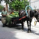 Marchand ambulant de pastèques à Istanbul