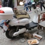 Chats à Galata