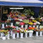 Marchande de fleurs d'Istanbul
