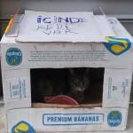 abri de fortune pour un chat d'Istanbul