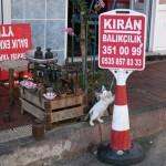 devant un poissonnier de Heybeliada à Istanbul