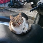 Chat d'Istanbul