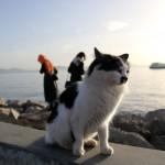Chat d'Istanbul en bord de mer
