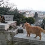 Chats au cimetière d'Eyüp