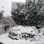 La végétation croule sous la neige à Istanbul