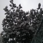 Paysage de neige à Istanbul