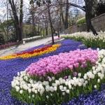 Parterre de fleurs dans le parc d'Emirgan