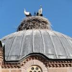 Les cigognes de la mosquée Imaret d'Osmancık