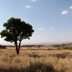 Les ruines au milieu de la nature à Hattuşa