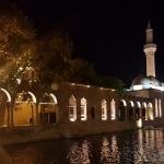 Le bassin aux carpes sacrées d'Urfa
