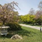 Dans le jardin japonais de Baltalimanı, Istanbul