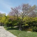 une allée du jardin japonais Baltalimanı, Istanbul