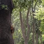 Ecureuil au parc de Yıldız à Istanbul