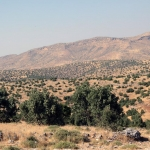 Entre Ömerli et Savur
